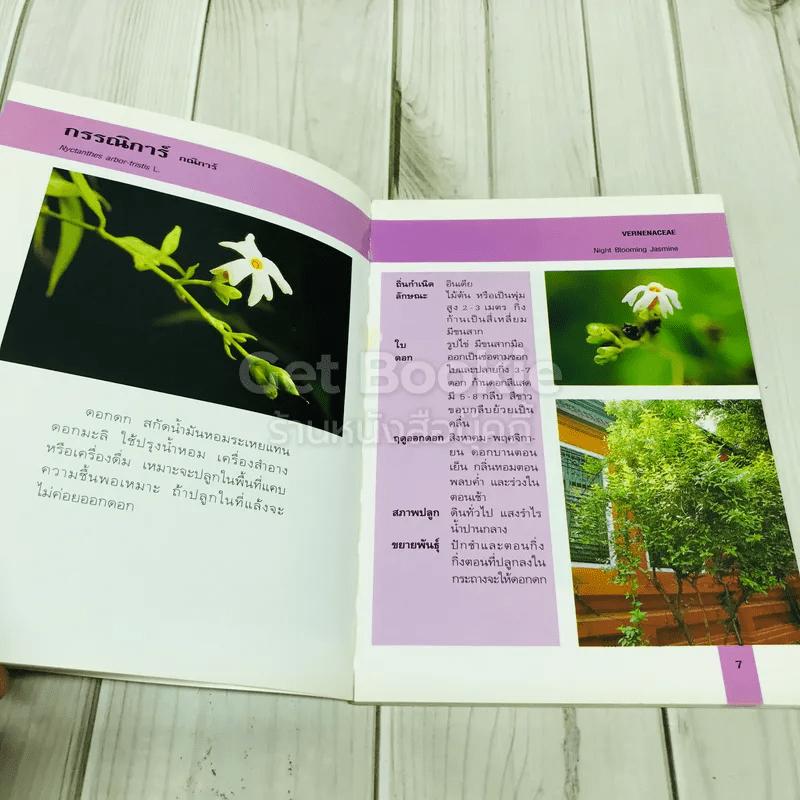 คู่มือคนรักต้นไม้ ไม้ดอกหอมสีขาว 2