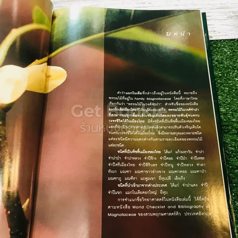 แมกโนเลียเมืองไทย Thai Magnoliaceae