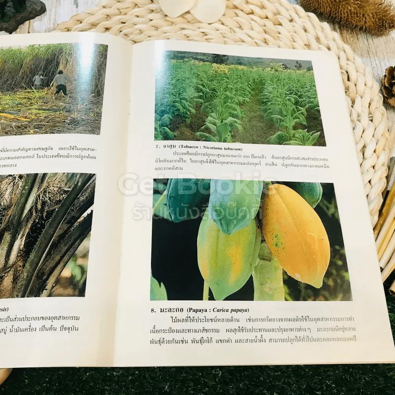 ชุดธรรมชาติศึกษา พืชเศรษฐกิจ