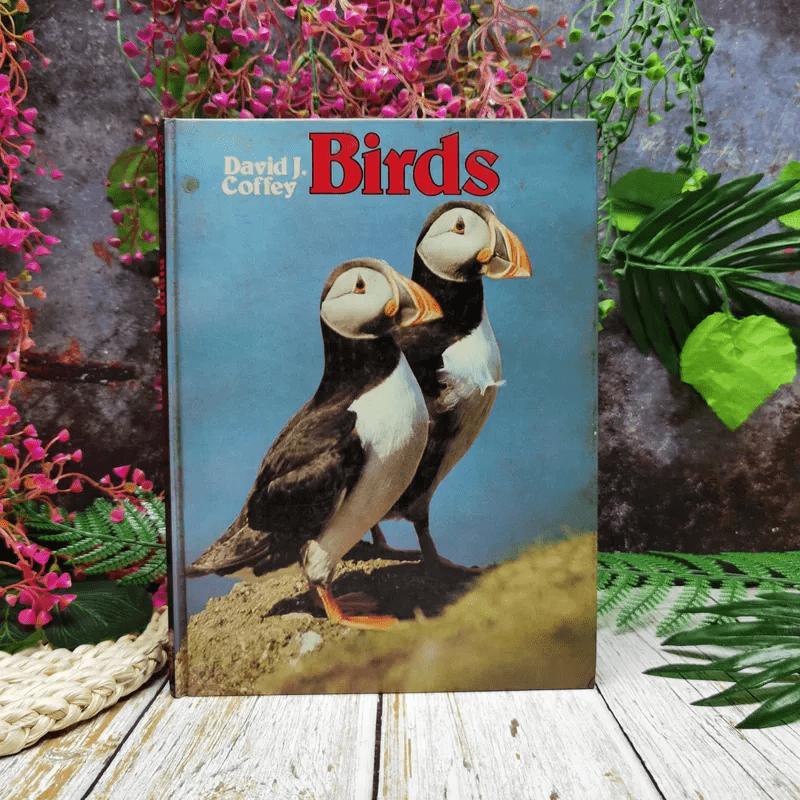 Birds - David J. Coffey