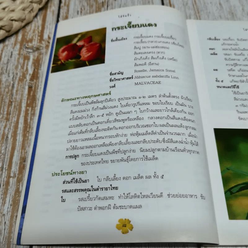 สมุนไพรกับวัฒนธรรมไทย ตอนที่ 2 ไม้ริมรั้ว